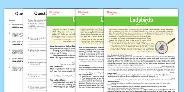 Ladybird Differentiated Reading Comprehension Activity Arabic Translation - arabic, Reading, comprehension, read, text, question, sentence, ladybird, insect, beetle, wings, spots
