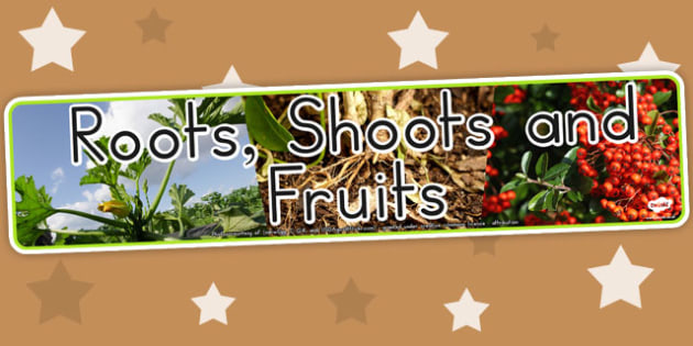 Roots Shoots and Fruits Photo Display Banner - Australia, Roots