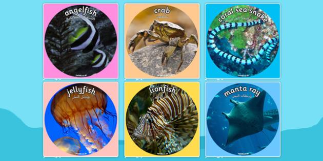 Under the Sea Themed Display Photo Cut Outs Arabic Translation - bilingual, fish, beach, summer