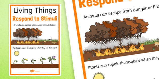 Living Things Respond To Stimuli Display Poster - australia, Science, Year 3, Living, Non-Living, Characteristics, Poster, Australian Curriculum