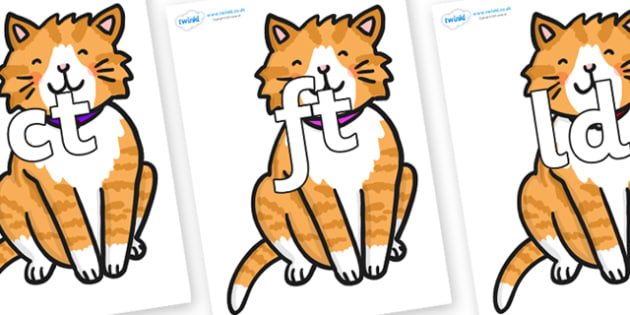 Final Letter Blends on Cat - Final Letters, final letter, letter blend, letter blends, consonant, consonants, digraph, trigraph, literacy, alphabet, letters, foundation stage literacy