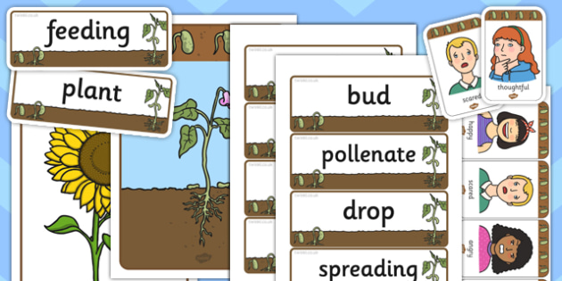 Bean Life Cycle Mind Map Starter Resource Pack - bean, life cycle