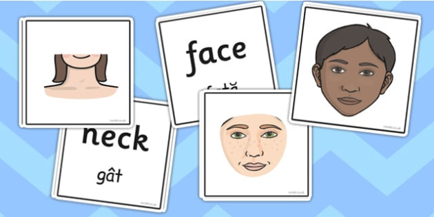 Parts of the Body Word and Picture Matching Cards Romanian Translation - romanian