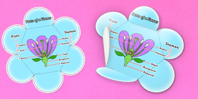Parts of a Flower Foldable Visual Aid Reference Leaflet - Flower, Foldable