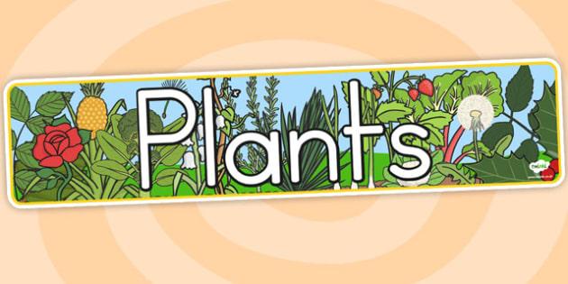 Plants Display Banner - australia, display, banner, photo, plants