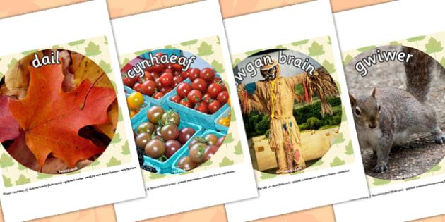 Autumn Display Photo Cut Outs Welsh Translation - seasons, wales