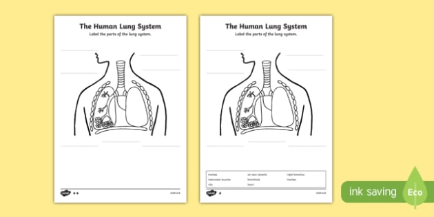 Human Body Lungs Diagram Labelling Activity Sheet - ourselves, body, worksheet