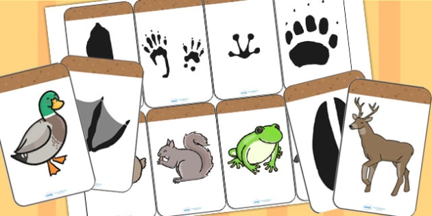 Animal Footprint Matching Activity - animals, match, matching