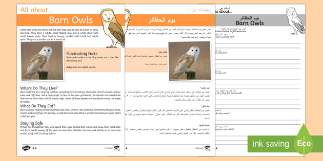 Barn Owls Reading Comprehension Pack English/Arabic - Barn Owls Reading Comprehension - barn owl, reading comprehension, comprehesion, comprehnsion, readi