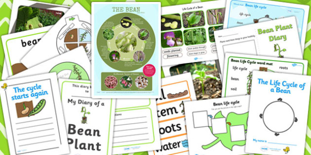 Bean Life Cycle Resource Pack - bean, life cycle, resource, pack