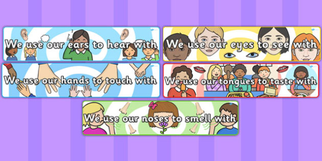 We Use Our Senses Small Display Banners - ourselves, all about me