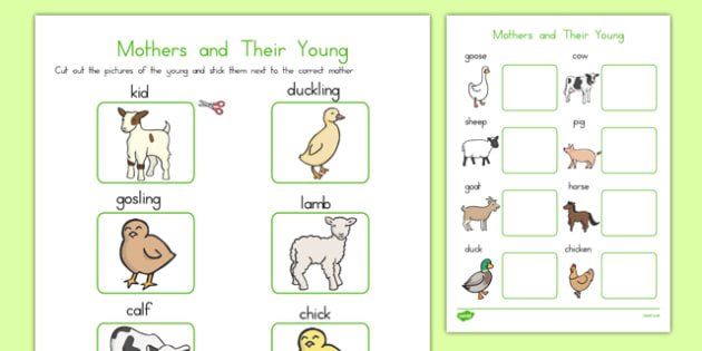 Mothers and their Young Farm Animals Match Activity - australia