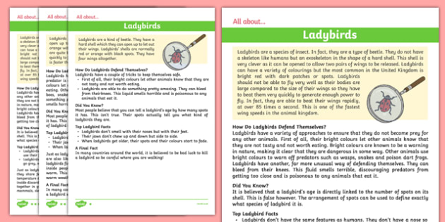 Ladybird Differentiated Fact File - ladybird, fact file, minibeast, differentiated