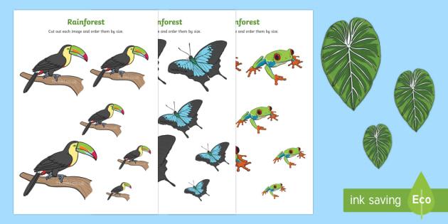 Rainforest Themed Size Ordering - rainforest, size ordering, size, ordering, order, activity