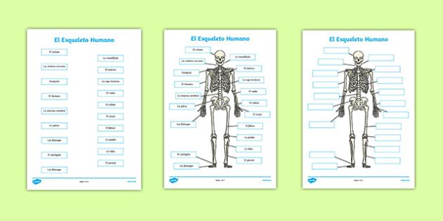 El Esqueleto Humano Human Skeleton Labelling Sheets Scientific Names Spanish - spanish, body, labels