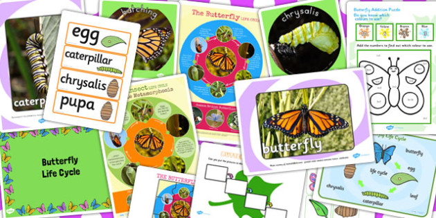 Butterfly Life Cycle Resource Pack - butterfly, resource, pack