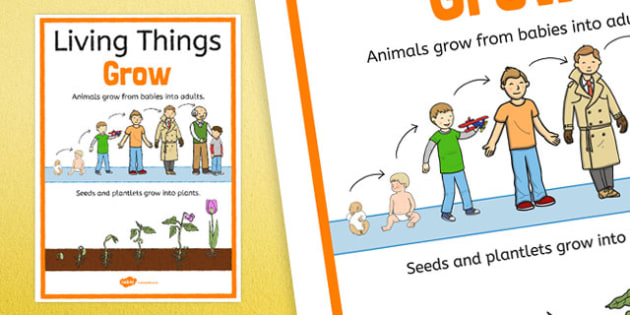 Living Things Grow Display Poster - australia, Science, Year 3, Living, Non-Living, Characteristics, Poster, Australian Curriculum