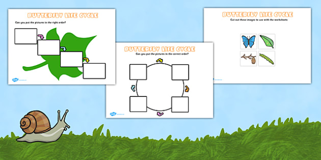 Butterfly Life Cycle Activity Sheets(Minibeasts) - Cocoon, Caterpillar, Egg, Minibeasts, Topic, Foundation stage, knowledge and understanding of the world, investigation, living things, snail, bee, ladybird, butterfly, spider