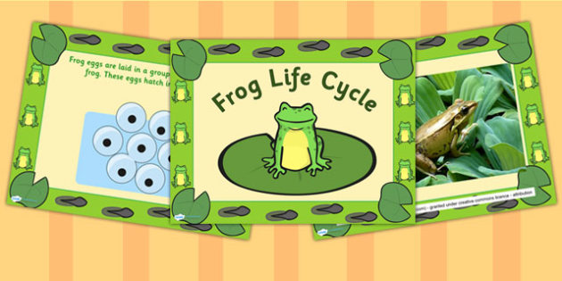 EYFS Frog Life Cycle PowerPoint - life cycles, science, eyfs