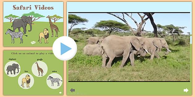 Safari Video PowerPoint - safari, safari powerpoint, safari video, powerpoint videos of safari, safari interactive powerpoint, powerpoint, video powerpoint