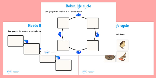 Robin Life Cycle Worksheets -  worksheets, worksheet, robin life cycle worksheets, robin life cycle activities, life cycle worksheets, robin, life cycle