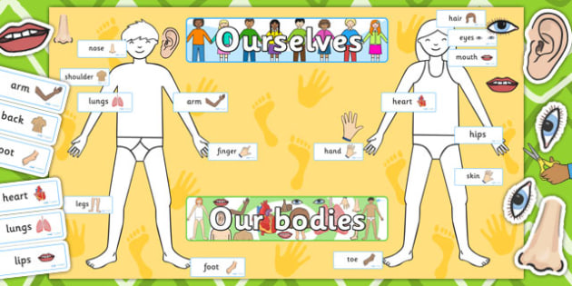 Ourselves Human Body Display Pack - ourselves, human, display