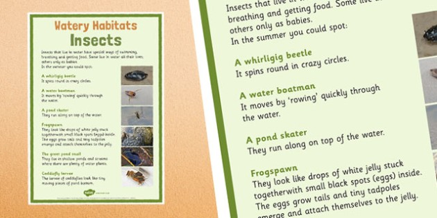 Canal Habitats Insects Display Poster - canal, habitats, canal habitats, display poster, display, poster, insects