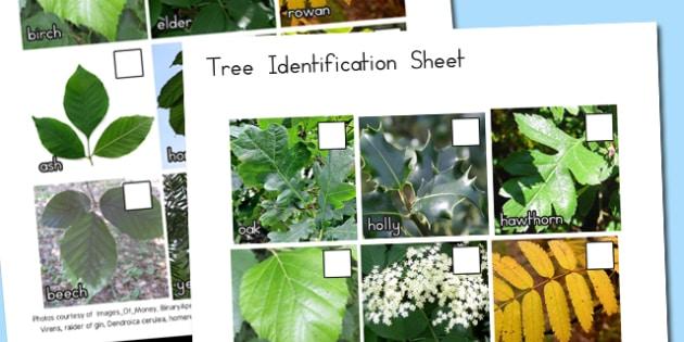Tree Identification Photo Sheet - australia, tree, identification