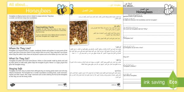 Honeybee Reading Comprehension Pack Arabic/English - Honeybee Reading Comprehension - honeybee, reading, comprehension, comprehesion, comprehnsion, readi