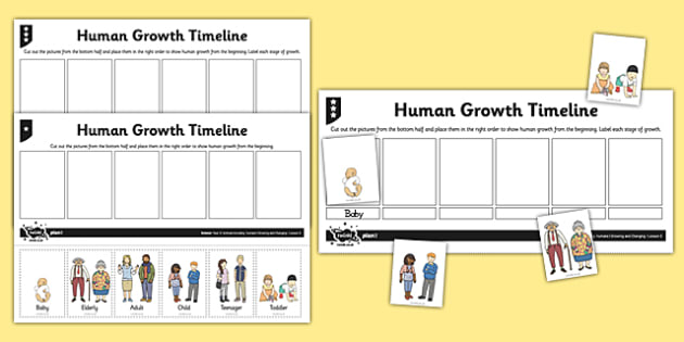Human Growth Timeline Activity Sheet - human growth, human life cycle, growing up, worksheet