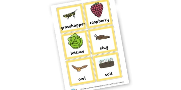 Animals Food Chain Cards - Primary Resources, food, animals, food web, carnivore
