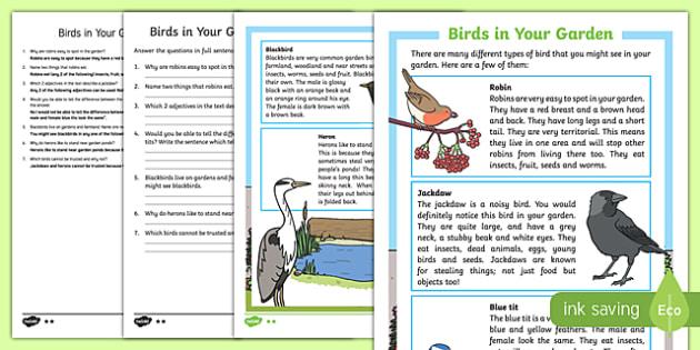 Birds in Your Garden Differentiated Reading Comprehension Activity