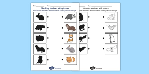 Nocturnal Animals Shadow Matching Worksheet - nocturnal animals, shadow matching