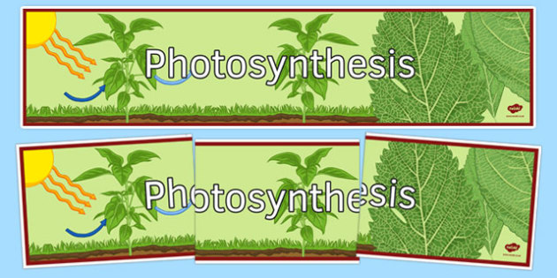 Photosynthesis Display Banner - photosynthesis, ks3, biology, display banner