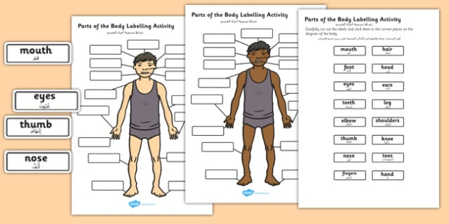 Body Parts Labelling Activity Arabic Translation - arabic, body, parts, labelling, activity