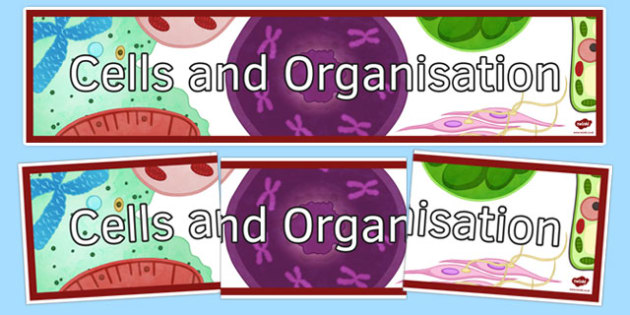 Cells and Organisation Display Banner - cells and organisation, display banner, display, banner
