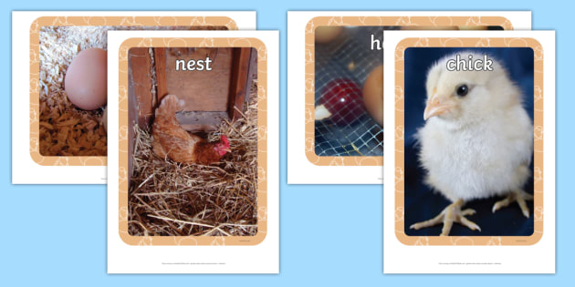 Life Cycle of a Hen Display Photos - Hen, life cycle, lifecycle, display, photo, display Photos, display, photos, plant growth, Hen, egg, chick, hatch, Life cycle, Foundation stage, knowledge and understanding of the world, investigation, living thin