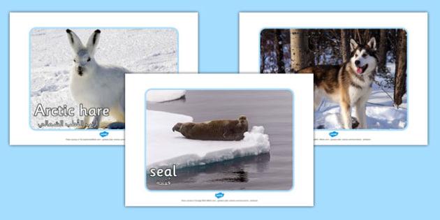 Arctic Animal Display Photos Arabic Translation - arabic, arctic, animals, display, photos