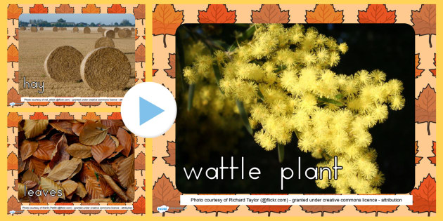 Autumn Photo PowerPoint - seasons, weather, discussion prompt