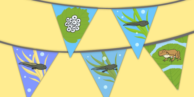 Frog Life Cycle Bunting - bunting, display, frog, life cycle