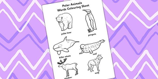 Polar Animals Words Colouring Sheet - polar, animals, colour