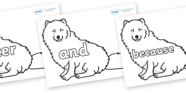 Connectives on Arctic Foxes - Connectives, VCOP, connective resources, connectives display words, connective displays