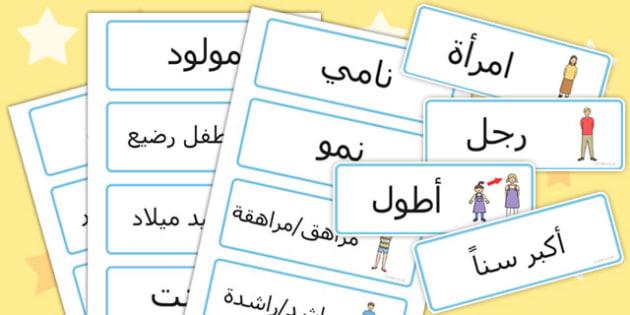 بطاقات كلمات عن النمو - النمو، مفردات النمو، نمو الإنسان
