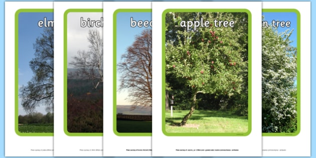 Trees Display Photos - Tree,photo, display Photos, display, photos, leaves, branches, trunk, roots, elm, oak, birch, beech, horse chestnut, maple