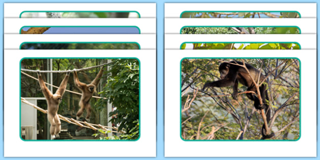 Monkeys Display Photos - Swing, eyfs, jungle, movement, trees, dance