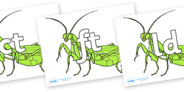Final Letter Blends on Praying Mantis - Final Letters, final letter, letter blend, letter blends, consonant, consonants, digraph, trigraph, literacy, alphabet, letters, foundation stage literacy