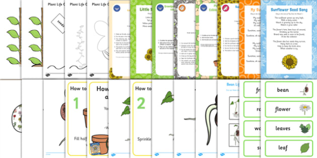 Childminder EYFS Plant Life Cycles Resource Pack