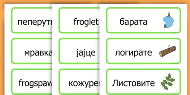 Life Cycle Word Cards - life cycles, lifecycle, visual aid, words - Macedonian