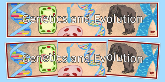 Genetics and Evolution Display Banner - genetics and evolution, ks3, biology, display banner