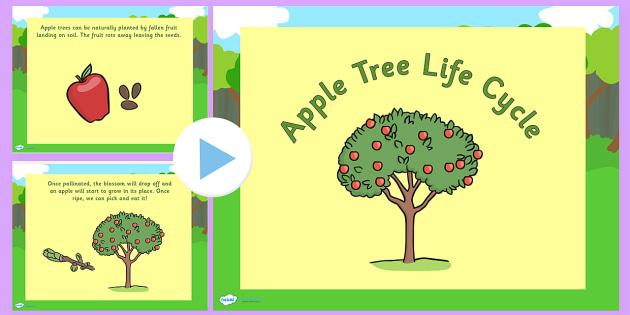 Australia Apple Tree Life Cycle PowerPoint - australia, apple
